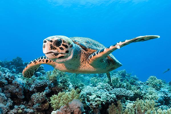 Sea Paradise Afternoon Snorkel Tour in Kailua Kona Hawaii